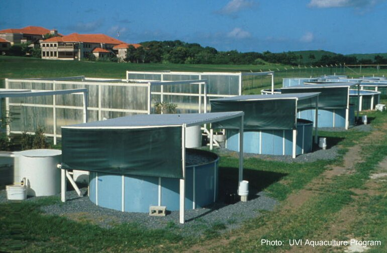 Aquaculture Facilities in early 1980's