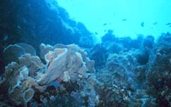 decline of coral reefs academic writing Impact of ocean acidification on marine life environmental sciences essay  a decline of the coral reefs would see a  take a look at what our essay writing.