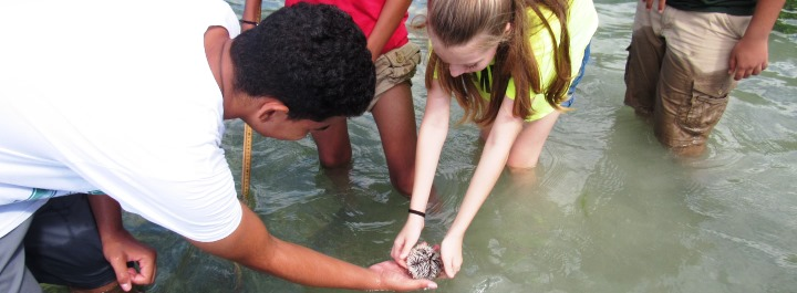 Learn about marine invertebrates that inhabit the VI.