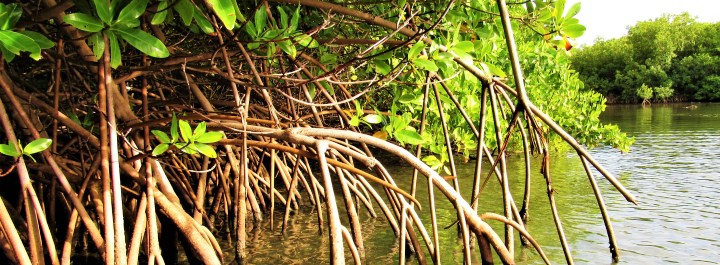 Protecting our coastal habitats such as mangrove forests.