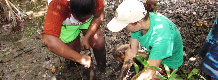 Research - Studying mangroves and blue carbon.