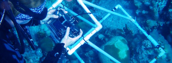 Research - Monitoring coral health around the territory.