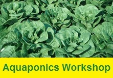 Aquaponics Workshop