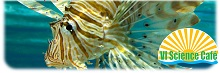 VI Science Cafe: Invasive Lionfish Discussion
