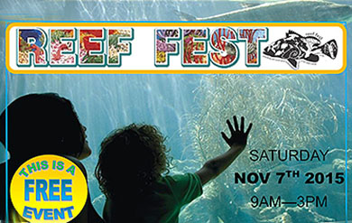 Reef Fest poster