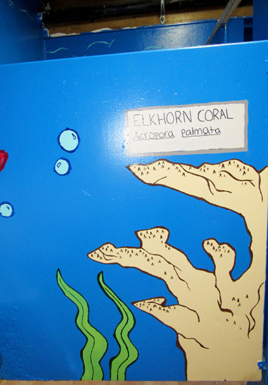 Painting of Elkhorn Coral in the bathroom of the Addelita Cancryn Junior High School.