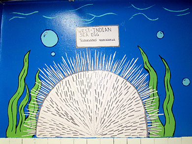Painting of Caribbean Sea Egg in the bathroom of the Addelita Cancryn Junior High School.