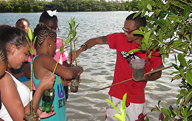 Students from the Addelita Cancryn Junior High School assisting with mangrove planting at UVI.