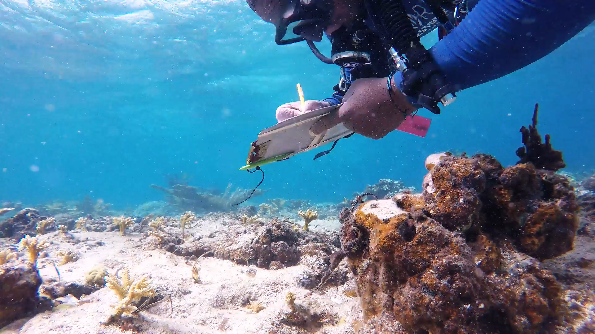 UVI student conducts marine research